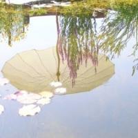 Gartenteich Sonnenschirm