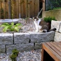Kiesbeet mitTrockenmauer aus Granitblöcken, und Gartentiger