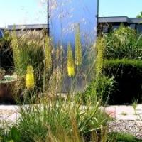Sichtschutz: Steppenkerze vor Sichtschutzwand aus Acrylglas als Raumteiler