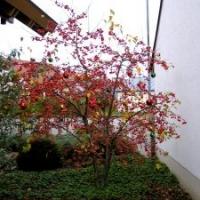 Garten-Winterschmuck Farbglashütte Lauscha Zierapfel