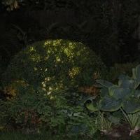 Gartenlicht Gartenbeleuchtung mit Niedervoltstrahlern Buchskugel