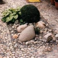 Natursteinpflaster: Rheinkieselpflaster mit Kiesbeet, Hosta plantaginea 'Royal Standard', Buchsbaumkugel