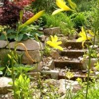 Bachlauf; Hemerocallis citrina, Taglilie; Trockenmauer aus Granit; Hosta sieboldiana 'Elegans', Funkie; Acer japonicum 'Atropurpureum', Japanahorn
