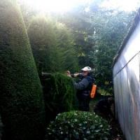 Heckenschnitt: Formschnitt (Topiary) Eibenkegel mit der Pellenc-Akku-Heckenschere