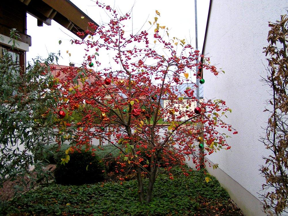 Zierapfel - Winterschmuck von der Natur und der Farbglashütte Lauscha