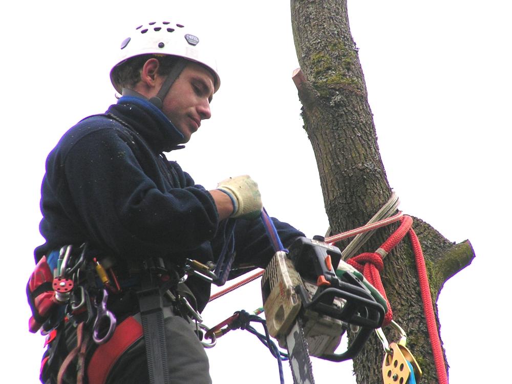 schnelle, sichere, schonende Baumpflege: Baumfällung in SeilklettertechnikUnser Partner, wenn es um Baumpflege und schwierige Baumfällung geht