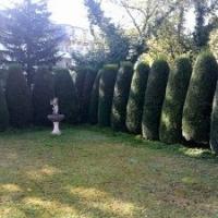 Heckeals Sichtschutz: Formschnitt (Topiary) Eibenkegel
