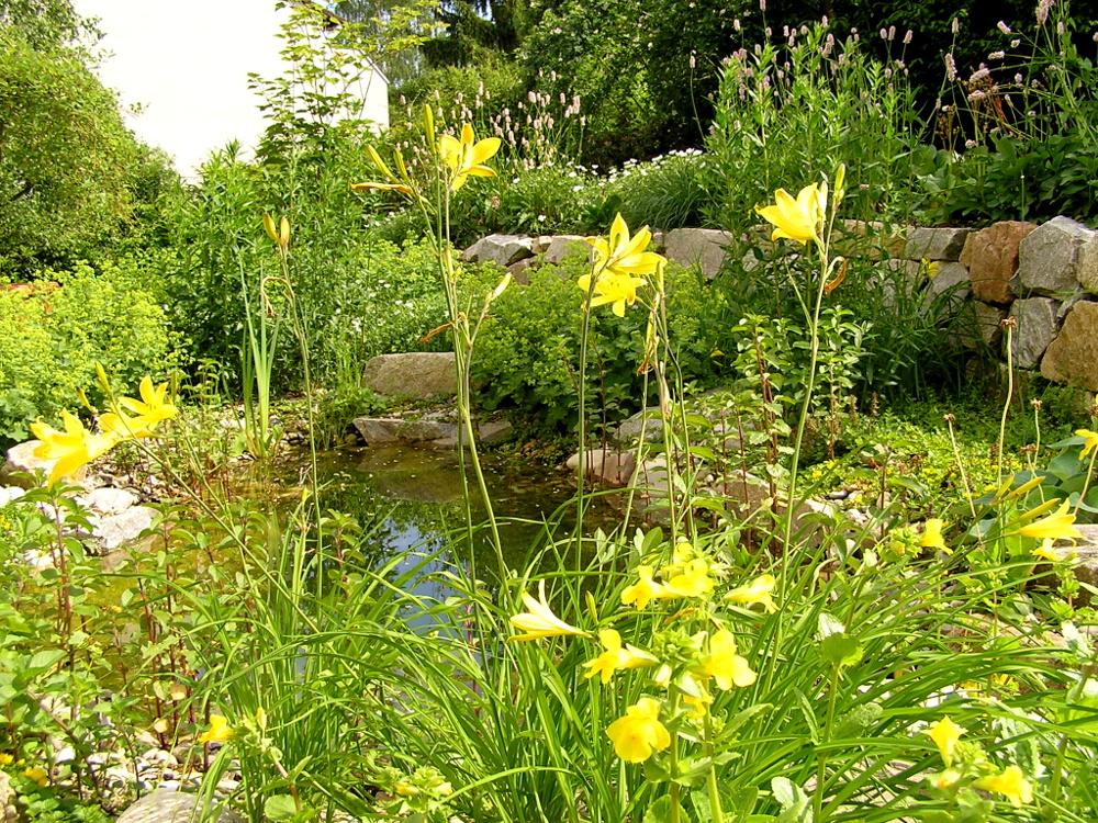 Gartenteich mit Uferbepflanzung und Trockenmauer